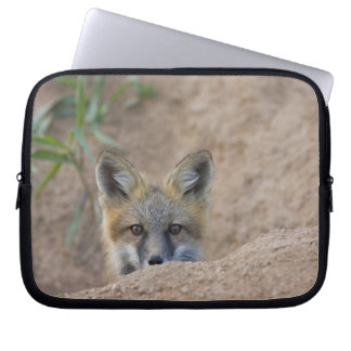 USA, Colorado, Pike National Forest. Shy red fox Computer Sleeves