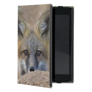 USA, Colorado, Pike National Forest. Shy red fox Cover For iPad Mini
