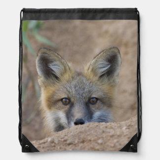 USA, Colorado, Pike National Forest. Shy red fox Drawstring Bag