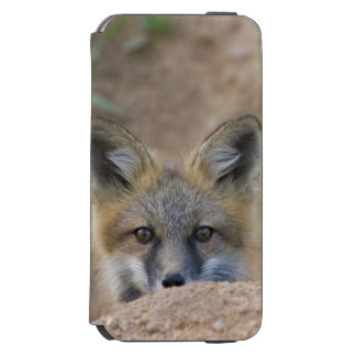USA, Colorado, Pike National Forest. Shy red fox Incipio Watson™ iPhone 6 Wallet Case
