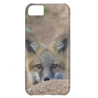 USA, Colorado, Pike National Forest. Shy red fox iPhone 5C Case