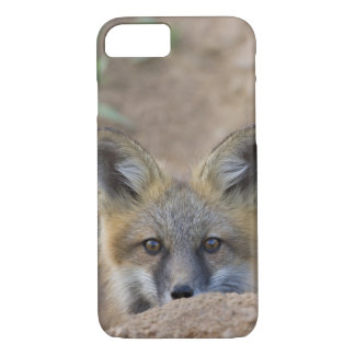 USA, Colorado, Pike National Forest. Shy red fox iPhone 8/7 Case