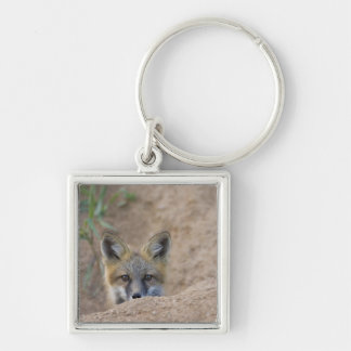 USA, Colorado, Pike National Forest. Shy red fox Key Ring