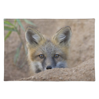USA, Colorado, Pike National Forest. Shy red fox Placemat
