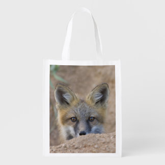 USA, Colorado, Pike National Forest. Shy red fox Reusable Grocery Bag