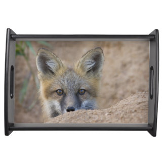 USA, Colorado, Pike National Forest. Shy red fox Serving Tray