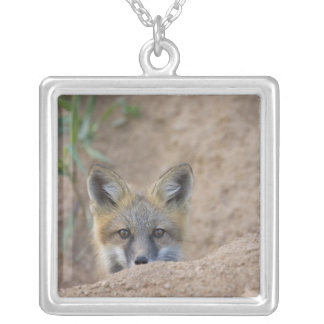 USA, Colorado, Pike National Forest. Shy red fox Silver Plated Necklace
