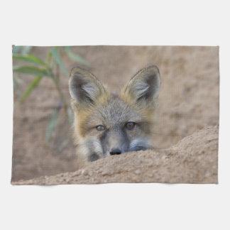 USA, Colorado, Pike National Forest. Shy red fox Tea Towel