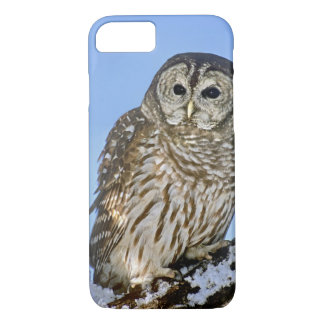 USA, Colorado. Portrait of barred owl perched on iPhone 8/7 Case