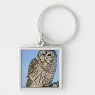 USA Colorado Portrait of barred owl perched on Keychain
