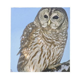 USA, Colorado. Portrait of barred owl perched on Notepad