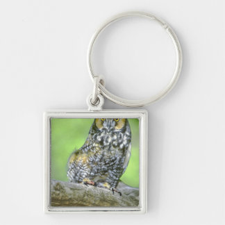 USA, Colorado. Portrait of long-eared owl Silver-Colored Square Key Ring