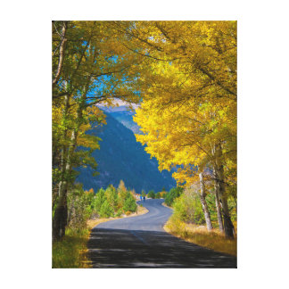 USA, Colorado. Road Flanked By Aspens Canvas Print