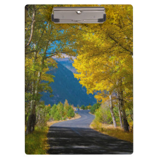 USA, Colorado. Road Flanked By Aspens Clipboard
