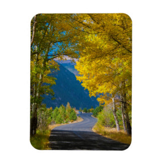 USA, Colorado. Road Flanked By Aspens Magnet