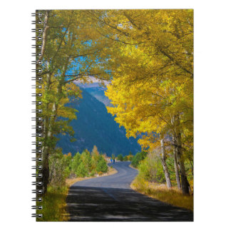 USA, Colorado. Road Flanked By Aspens Notebook