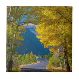 USA, Colorado. Road Flanked By Aspens Small Square Tile