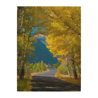 USA, Colorado. Road Flanked By Aspens Wood Wall Art