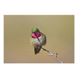 USA, Colorado, Rocky Mountain National Park, 2 Photo Print
