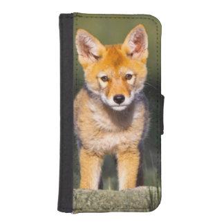 USA, Colorado, Rocky Mountain National Park iPhone SE/5/5s Wallet Case