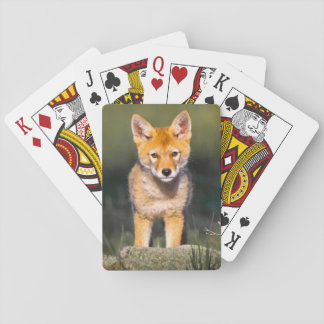 USA, Colorado, Rocky Mountain National Park Playing Cards