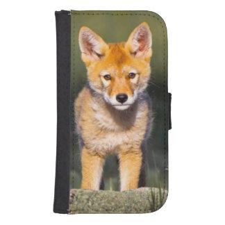 USA, Colorado, Rocky Mountain National Park Samsung S4 Wallet Case