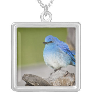 USA, Colorado, Rocky Mountain National Park, Silver Plated Necklace
