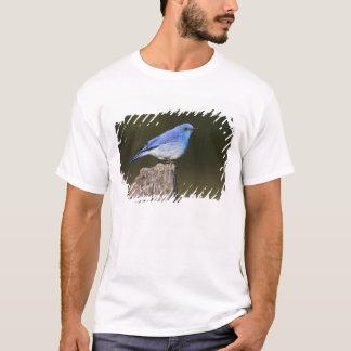 USA, Colorado, Rocky Mountain National T-Shirt