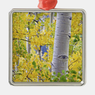 USA, Colorado, Rocky Mountains.  Intimate aspen 2 Christmas Ornament