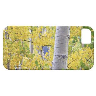 USA, Colorado, Rocky Mountains.  Intimate aspen 2 iPhone 5 Case