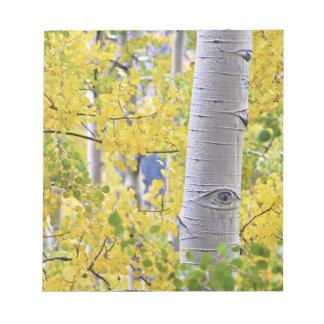 USA, Colorado, Rocky Mountains.  Intimate aspen 2 Notepad