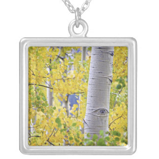 USA, Colorado, Rocky Mountains.  Intimate aspen 2 Silver Plated Necklace