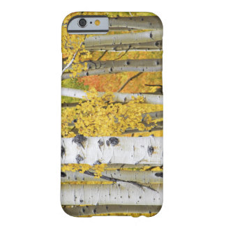USA, Colorado, Rocky Mountains.  Intimate aspen Barely There iPhone 6 Case