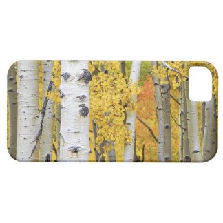 USA, Colorado, Rocky Mountains.  Intimate aspen iPhone 5 Cases