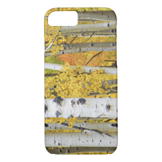 USA, Colorado, Rocky Mountains.  Intimate aspen iPhone 8/7 Case