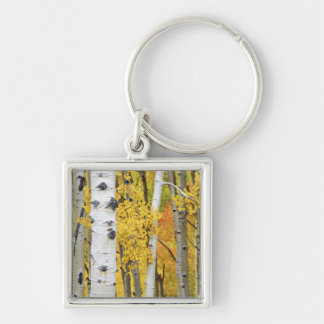 USA, Colorado, Rocky Mountains.  Intimate aspen Key Ring