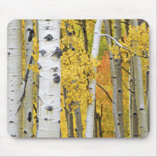 USA, Colorado, Rocky Mountains.  Intimate aspen Mouse Mat