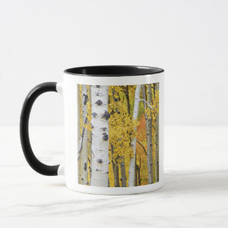 USA, Colorado, Rocky Mountains.  Intimate aspen Mug