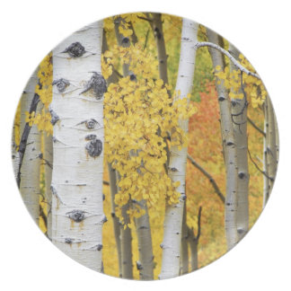 USA, Colorado, Rocky Mountains.  Intimate aspen Plate