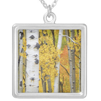 USA, Colorado, Rocky Mountains.  Intimate aspen Silver Plated Necklace
