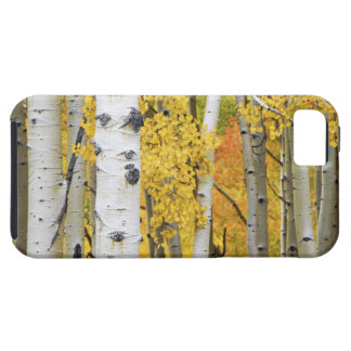 USA, Colorado, Rocky Mountains.  Intimate aspen Tough iPhone 5 Case