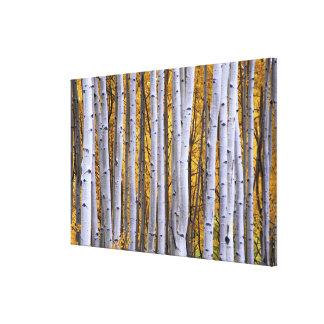 USA, Colorado, Rocky Mountains.  Intimate scene Gallery Wrap Canvas