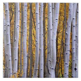 USA, Colorado, Rocky Mountains.  Intimate scene Tile
