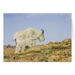 USA, Colorado, Rocky Mountains, Mount Evans, Greeting Card