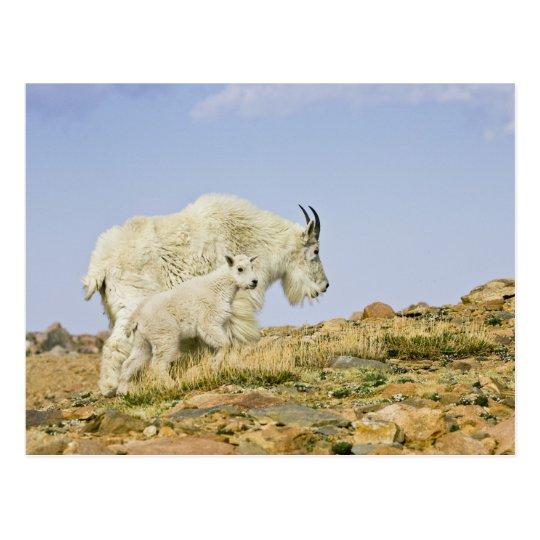 USA, Colorado, Rocky Mountains, Mount Evans, Postcard