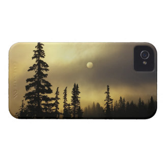 USA, Colorado, San Isabel National Forest. Case-Mate iPhone 4 Cases