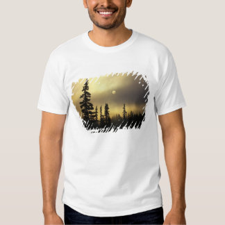 USA, Colorado, San Isabel National Forest. Tee Shirts