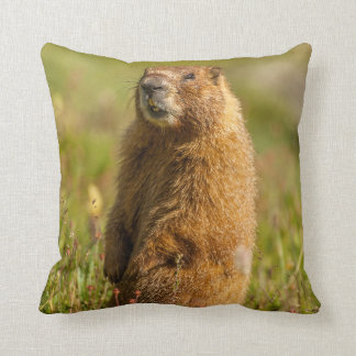 USA, Colorado, San Juan Mountains Cushion