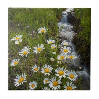 USA, Colorado, San Juan Mountains. Daisies Tile
