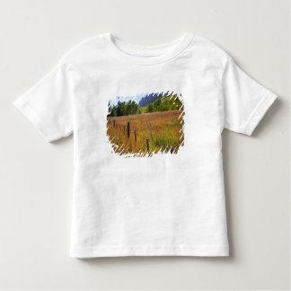 USA, Colorado, San Juan National Forest, along Tshirt